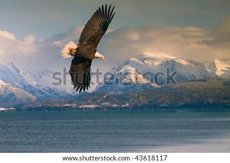 bald eagle over homer alaska harbor - stock photo