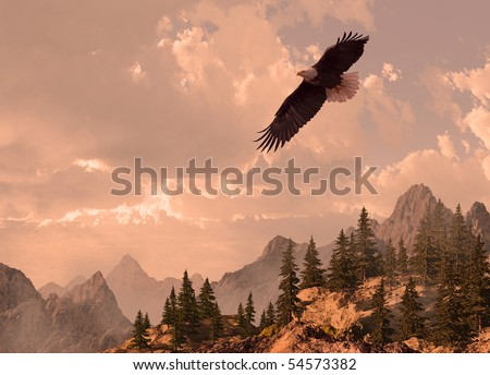 Bald eagle soaring in the Rocky Mountain high country. - stock photo