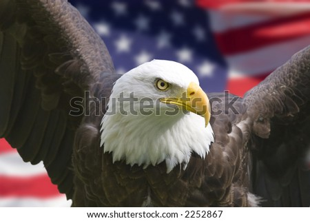 Bald eagle with American flag, focus on head (clipping path) - stock photo