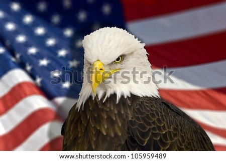 Bald eagle with american flag out of focus. - stock photo