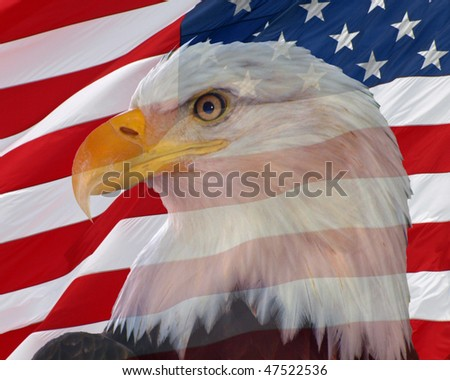 Bald Eagle with an American Flag backdrop - stock photo