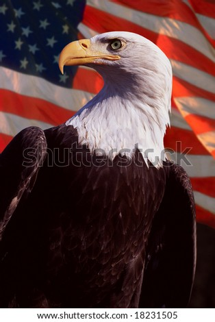 bald eagle with flag in background - stock photo