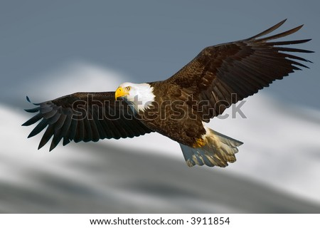 bald eagle with light on face and in flight against illustrated mountain background - stock photo