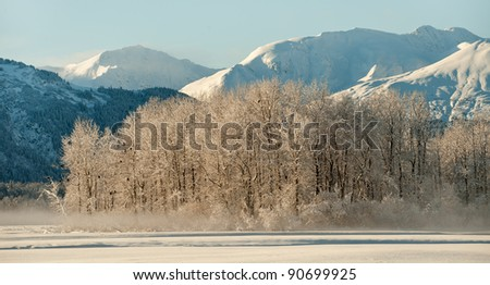Bald Eagles on the ground and on snow covered branches. Chilkat. Haines. Alaska - stock photo