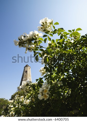 Bald Head Lighthouse seen through wild roses at Bald Head Island, North Carolina. - stock photo