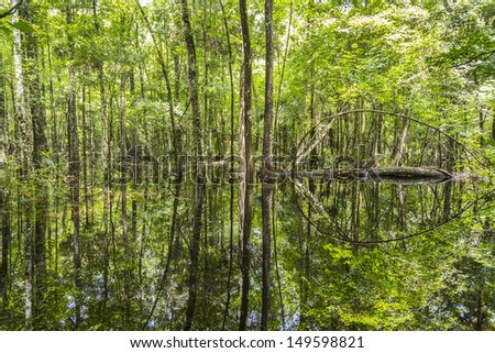 Bald Trees reflecting in the water in a florida swamp on a warm summer day - stock photo