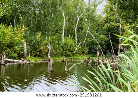 Bald Trees reflecting in the water  in a swamp on a warm summer day - stock photo