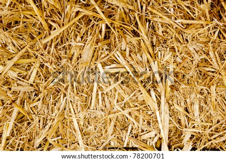 bale golden straw texture ruminants animal food background - stock photo