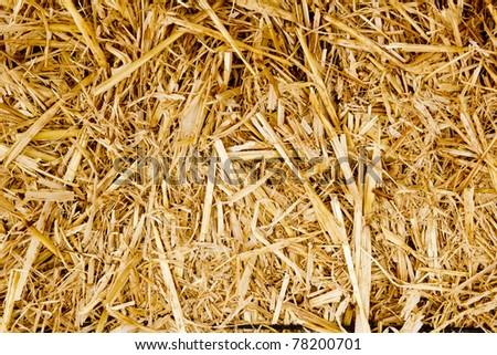 bale golden straw texture ruminants animal food background - stock photo