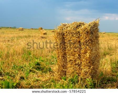 Bale of Hay - stock photo