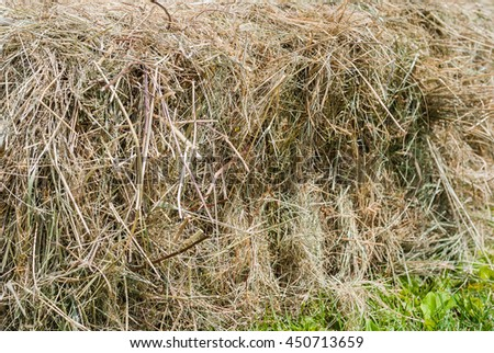 Bale of hay close-up on green grass - stock photo