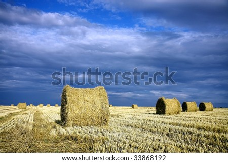 bale of wheat on the field