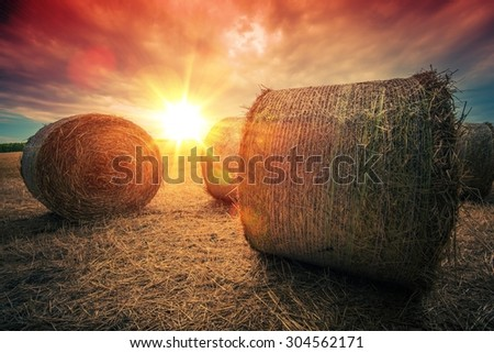 Baled Hay Rolls at Sunset. Hay Bales Countryside Landscape. - stock photo