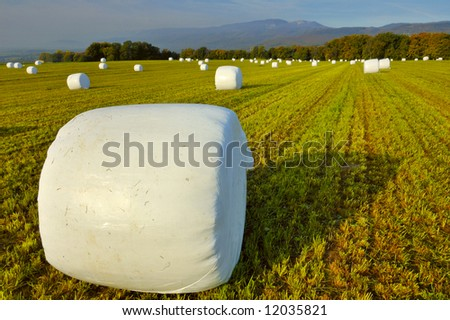 Bales of a green crop, wrapped up in plastic for storage. Jura mountains in the background. - stock photo