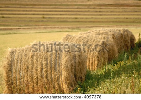 Bales of grass feeding in field - stock photo