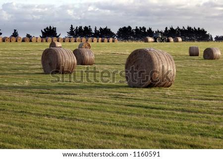 Bales of hay - stock photo