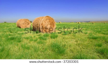bales of hay in a green field - stock photo