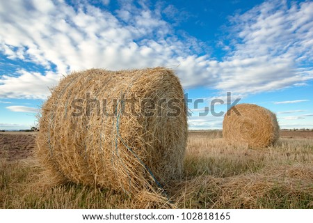 bales of hay in the farm field at summer/hay rolls in the farm field - stock photo