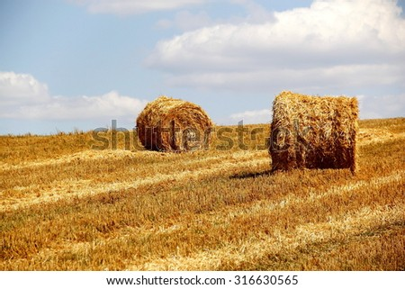 bales of hay on the field /hay rolls in the farm field