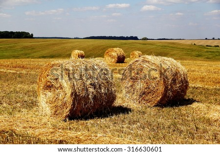 bales of hay on the field /hay rolls in the farm field - stock photo