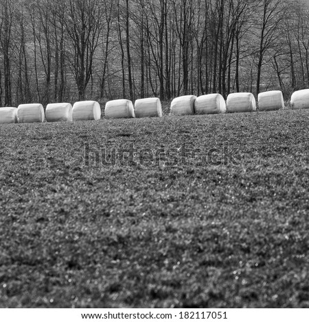 Bales of hay wrapped in white foil, black and white picture, spring, in a row row  - stock photo