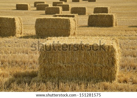 Bales of straw after harvest in a field in Denmark - stock photo