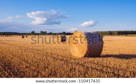 bales of straw at late afternoon. summer landscape
