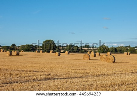 Bales of straw in a field. - stock photo