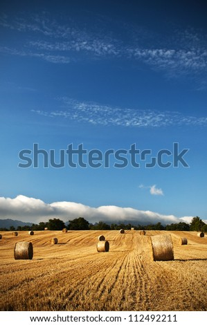 Bales of straw in the wheat fields - stock photo