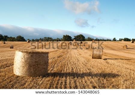 Bales of straw in the wheat fields, Burgos, Spain - stock photo