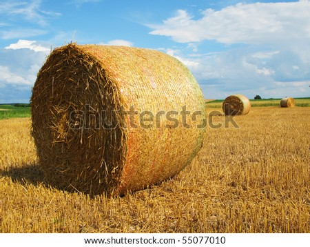 Bales of straw on a field