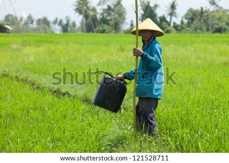 BALI - FEBRUARY 15. Farmer working with yellow hat in paddy fields on February 15, 2012 in Bali, Indonesia. Rice is the source of livelihood for about 100 million people in Indonesia.