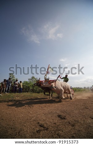BALI, INDONESIA - JULY 5: Spectators wait at the finishing line in makepung (buffalo chariot race) in Bali, Indonesia on July 5,2009.In Makepung the race is between two carts pulled by water buffaloes