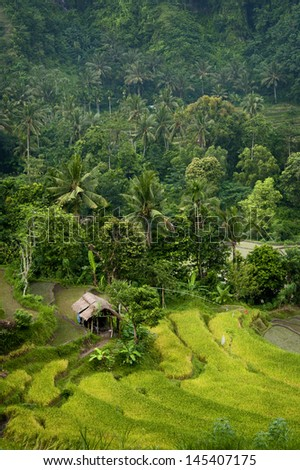 Bali Rice Field. The lush rice terraces of eastern Bali seen on the way to the coastal village of Amed. - stock photo