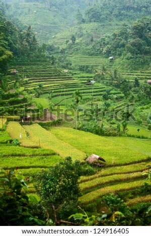 Bali Rice Terraces. These beautiful rice fields can be seen on the road to Amed in east Bali, Indonesia. - stock photo