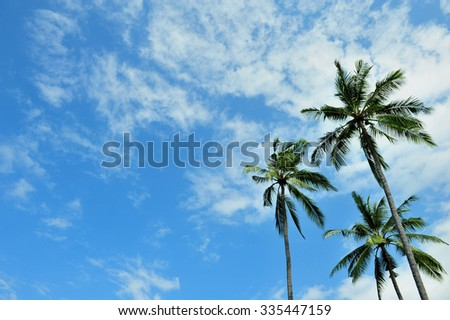 Bali's green palm tree on blue sky background
