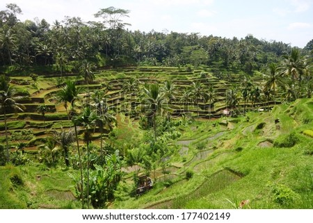 Balinese village and Rice terrace - stock photo