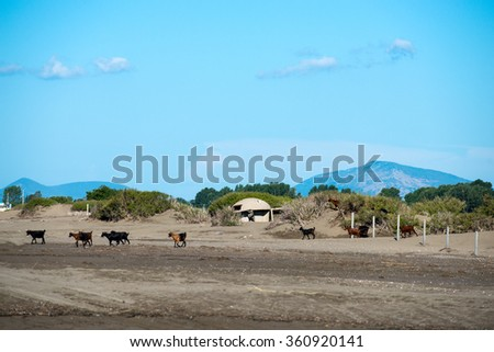 Balkan landscape, the Adriatic Sea, a goat and a concrete bunker, the sand and the coast - stock photo