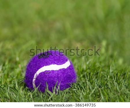 Ball on green grass - stock photo