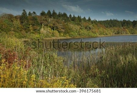 Ballynahinch woods and river in Galway in Ireland