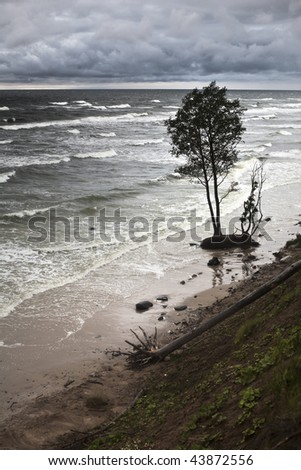 Baltic coast with eroded coastline in the place of former beach due to the climate warming - stock photo