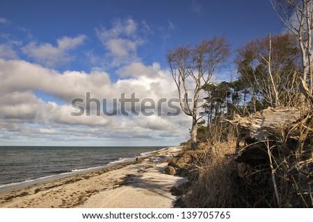 Baltic Sea Coast of Darss Island, Germany - stock photo