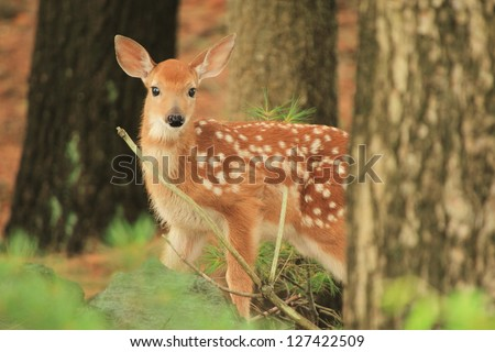 Bambi - stock photo