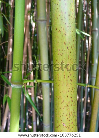 Bamboo A close up photographed in a baboo grove. - stock photo