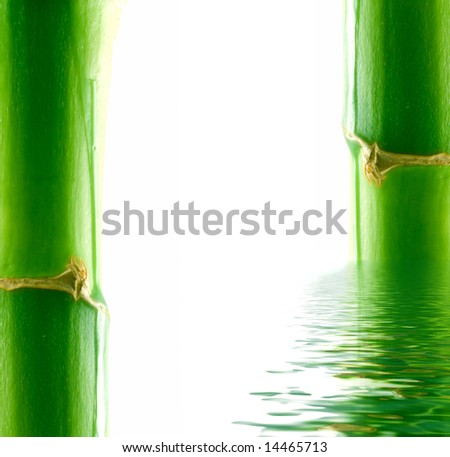 Bamboo and water. Isolation on white - stock photo