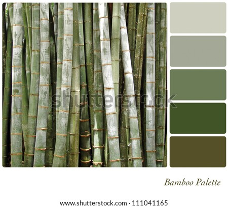 Bamboo background colour palette with complimentary swatches. - stock photo