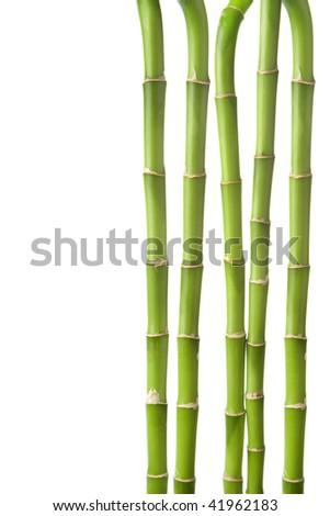 bamboo background isolated - stock photo