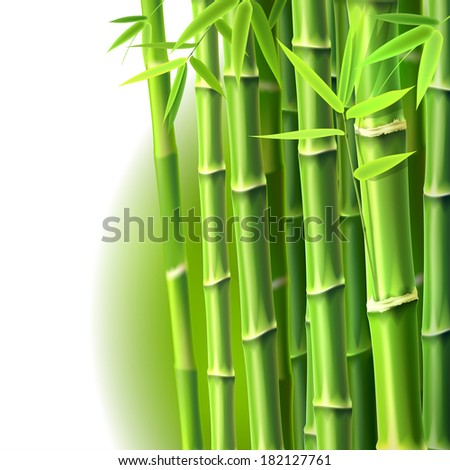 Bamboo Background. Raster version.