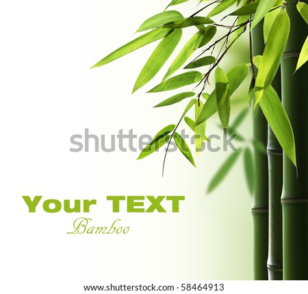 Bamboo background with copy space - stock photo