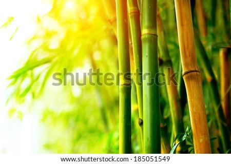 Bamboo. Bamboos Forest. Growing bamboo border design - stock photo